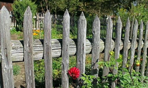 garden service web design